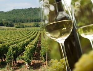 фото белого вина