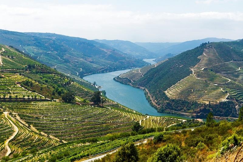 Виноградники между долинами Доуру и Минью фото