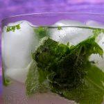 фото коктейля мохито