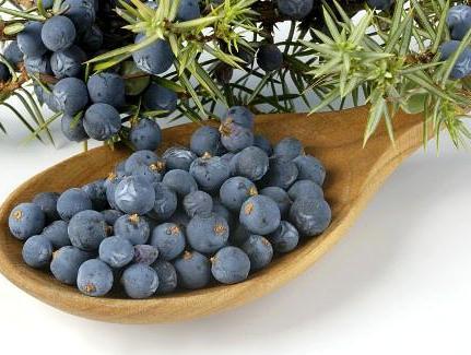 фото правильных ягод для приготовления джина