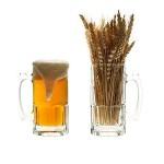 пиво из порошка