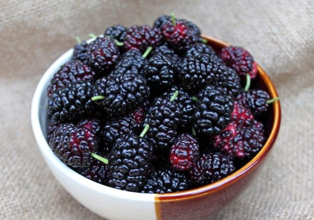 ягоды шелковицы фото