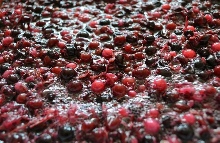 мезга на поверхности виноградного сусла