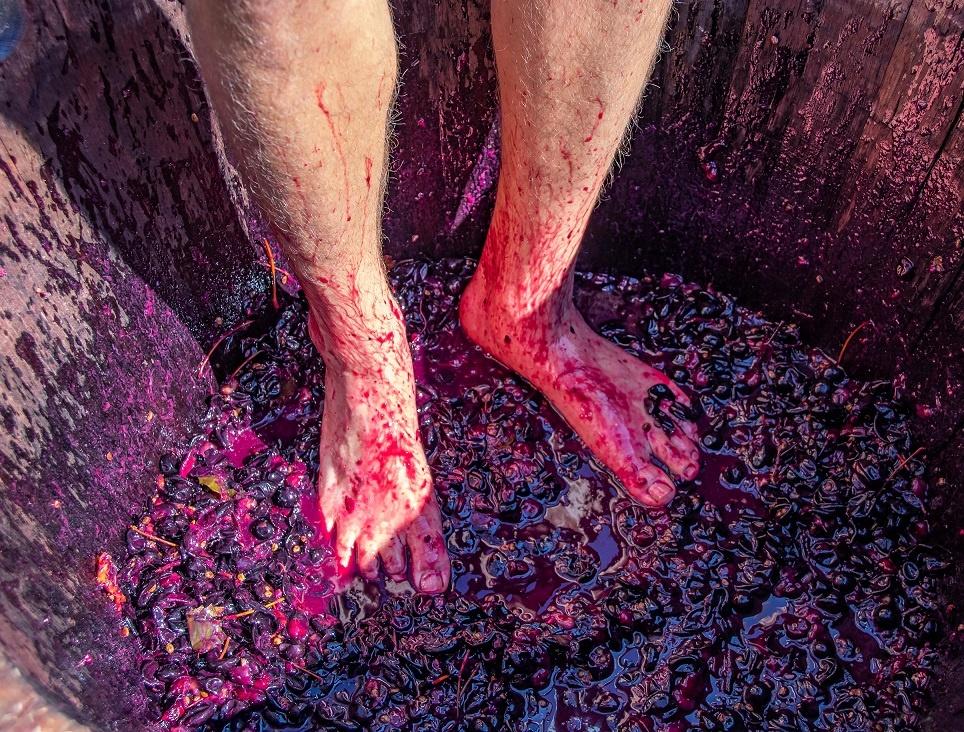 как давить виноград ногами