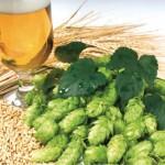 какой гормон содержится в пиве