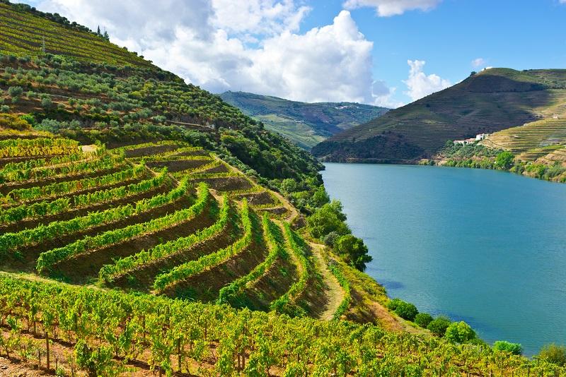 Виноградники Дору на склонах фото