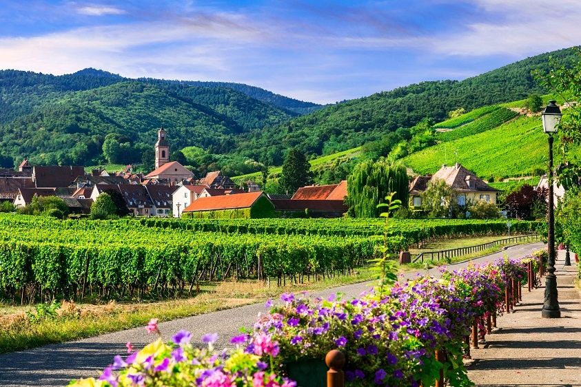 фото французского виноградника Эльзаса