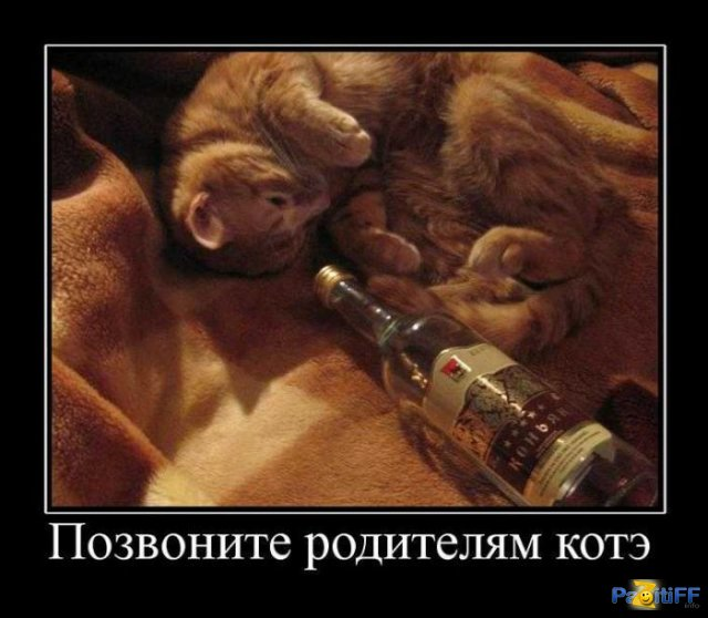 1284844702_demotivator127