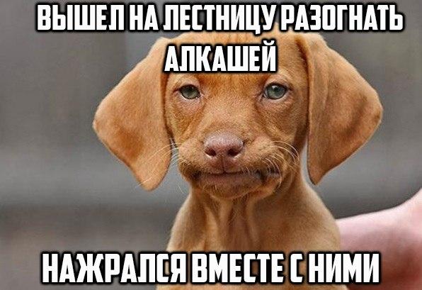 aE-zali9oyk