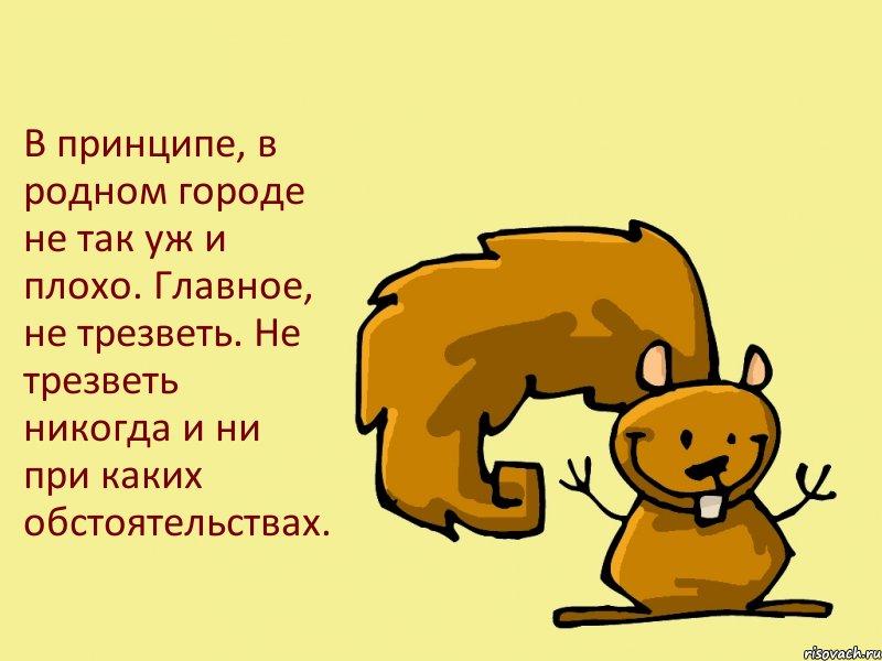 belka_63534169_big_