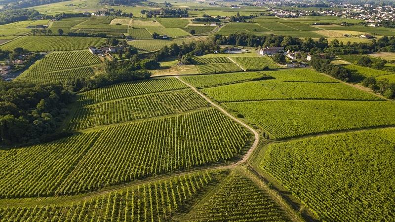 фото виноградников Сотерна