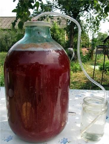 фото брожения вина из сухофруктов под гидрозатвором