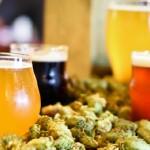 понятие крафтового пива и его отличия от обычного