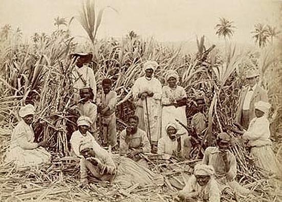 рабы на плантациях сахарного тростника фото