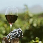 вино из винограда мерло фото