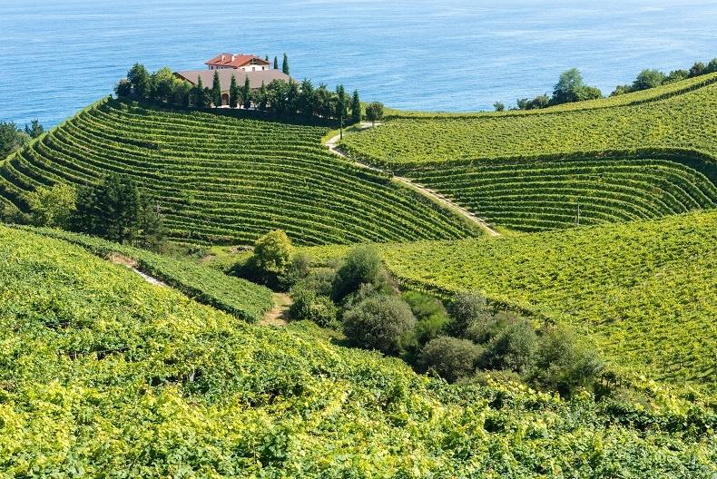 фото виноградника в Испании
