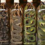 водка со змеей фото