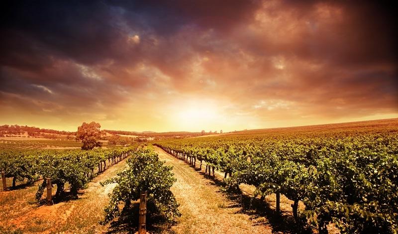 фото австралийских виноградников