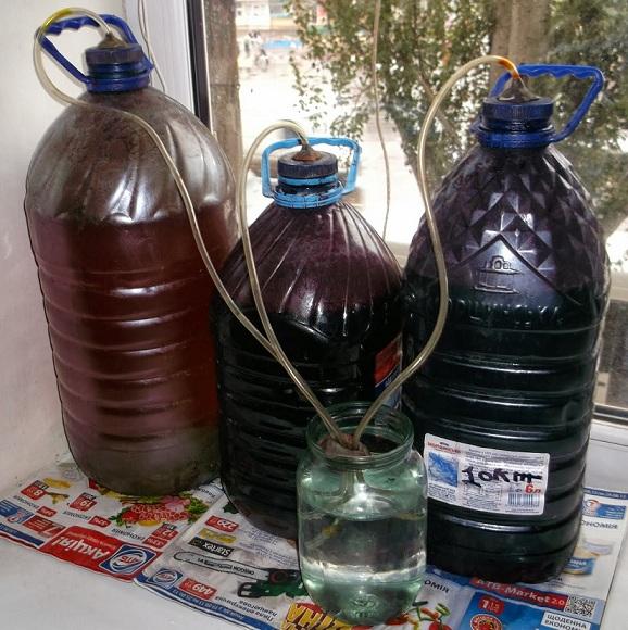 фото брожения вина в пластиковой баклажке