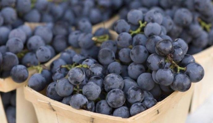 виноград изабелла в Абхазии
