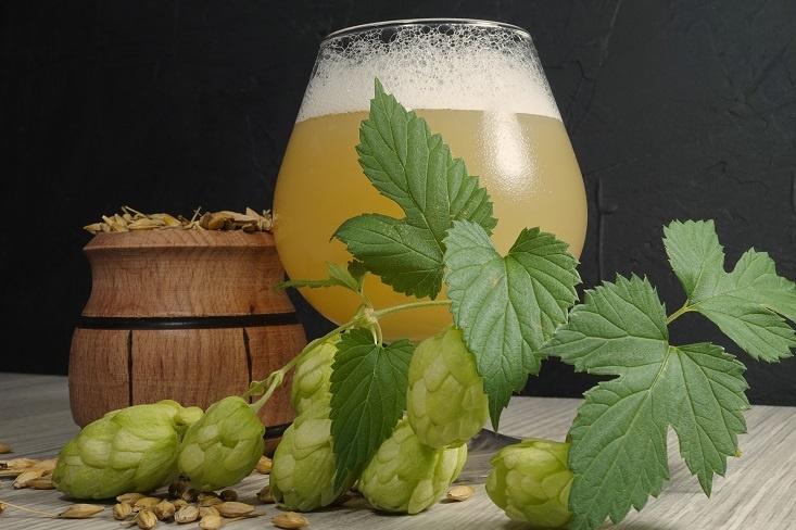 от чего зависит горечь пива