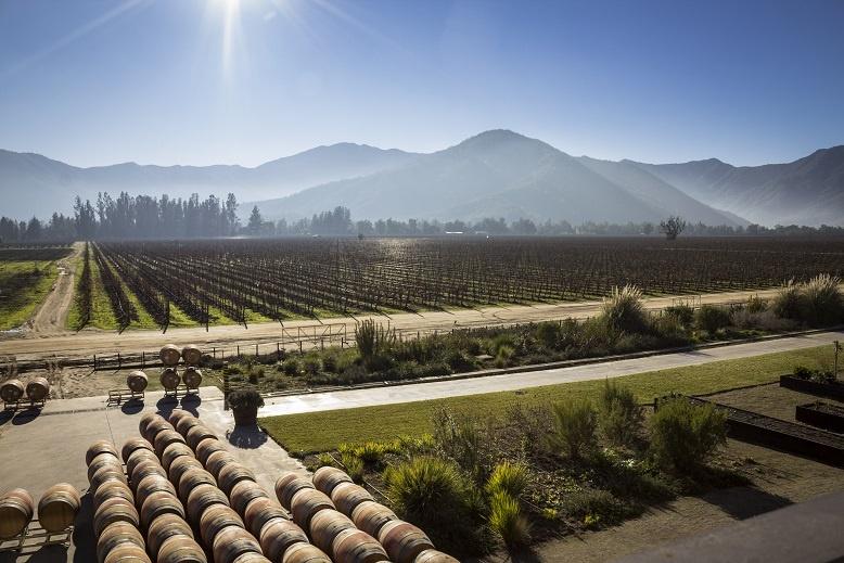 фото виноградника в Чили