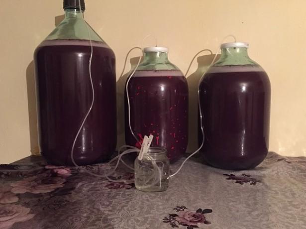 фото брожения вина под самодельным водяным затвором
