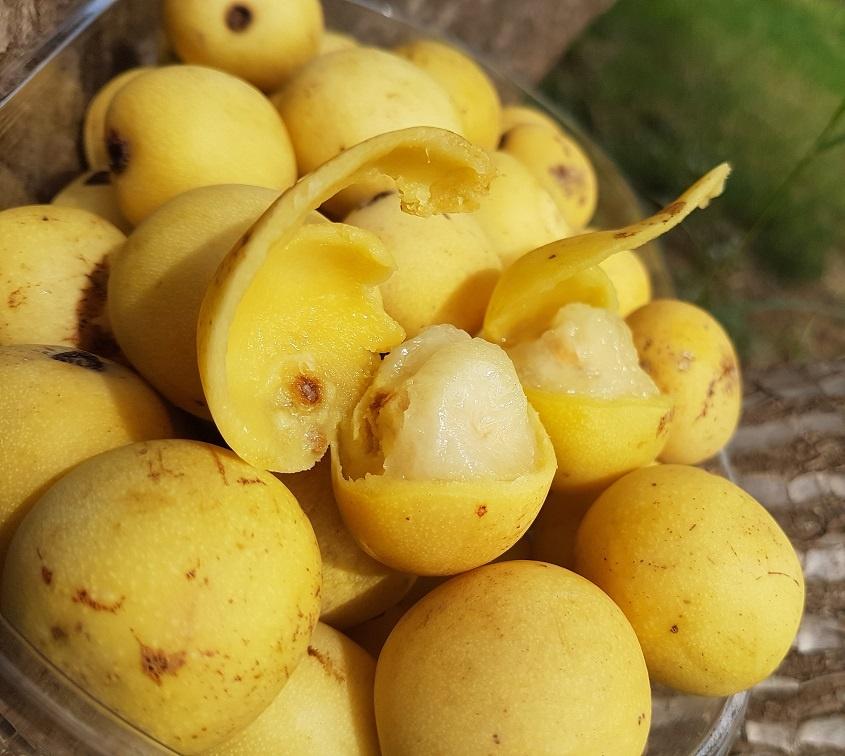 плоды марулы
