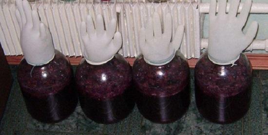 Вино из винограда Лидия - простой рецепт в домашних условиях