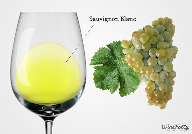 цвет вина совиньон блан фото