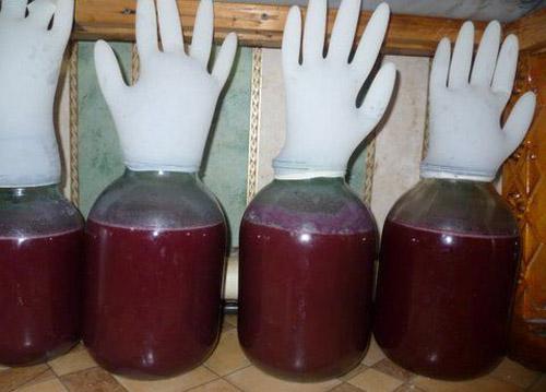 Как сделать вино из угорки фото 585