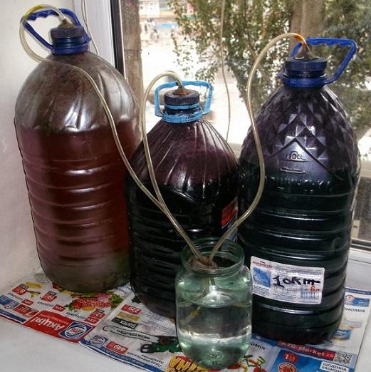 Фото рецепт вина из сливы в домашних условиях