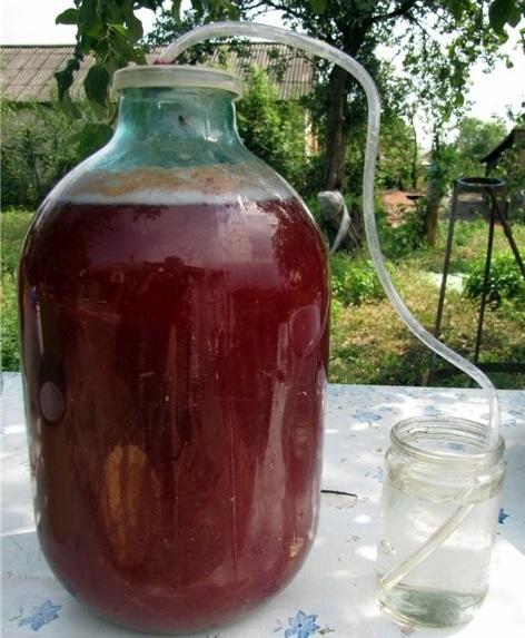 фото брожения вина из йошты под гидрозатвором