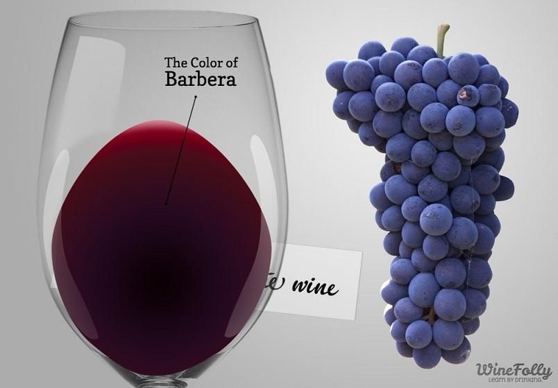 цвет вина барбера фото