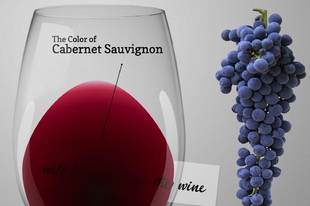 фото винограда Каберне Совиньон