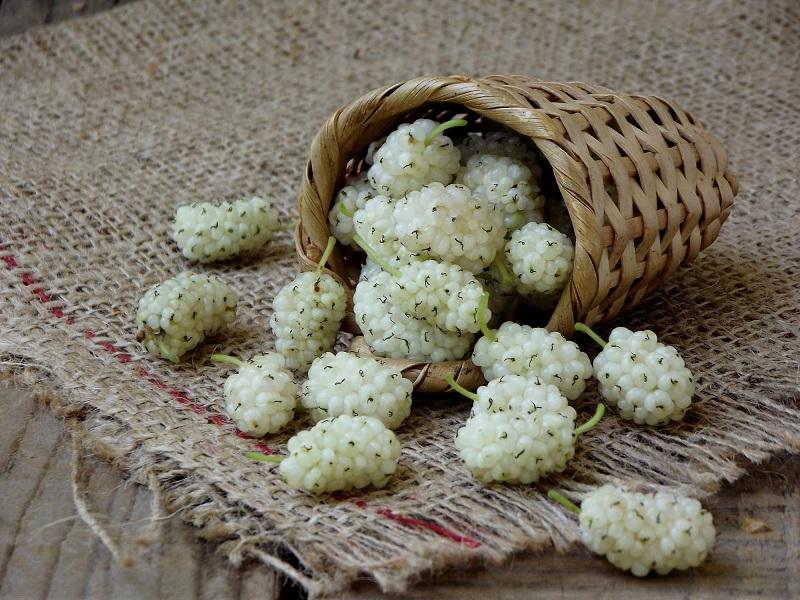фото ягод белой шелковицы