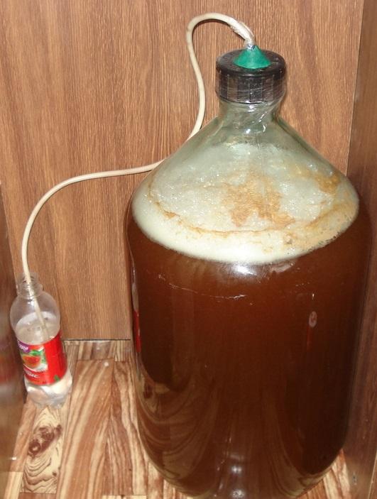 фото брожения морковного вина под гидрозатвором