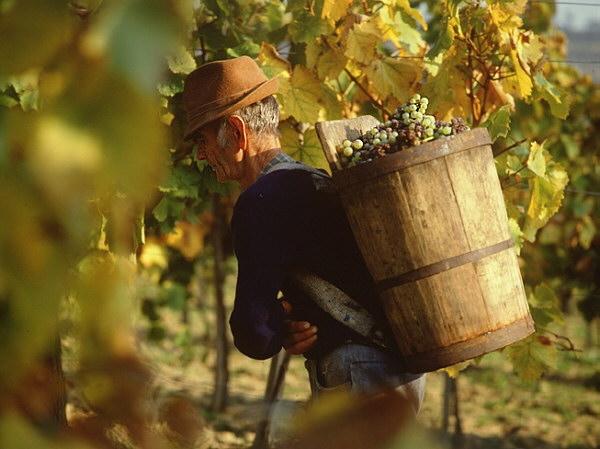 фото корзин путтонов для токайского вина асу