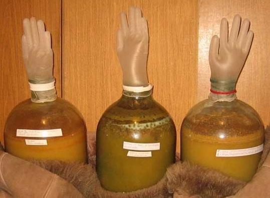 фото перчатки для брожения вина из моркови