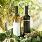 фото вина Мальвазия в бутылках