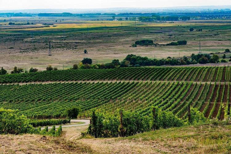 фото виноградников Токай
