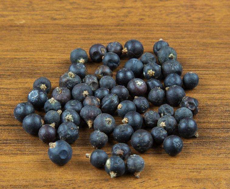 фото можжевеловых ягод для приготовления настойки