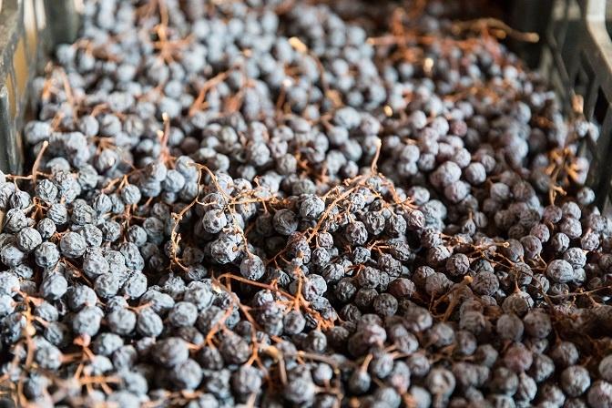 фото винограда для производства вина Вальполичелла