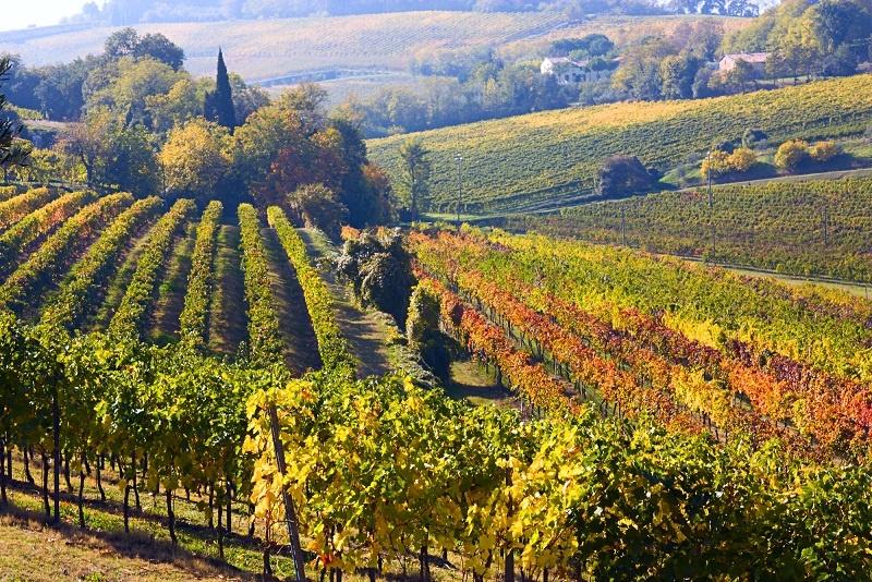 виноградник Вальполичелла
