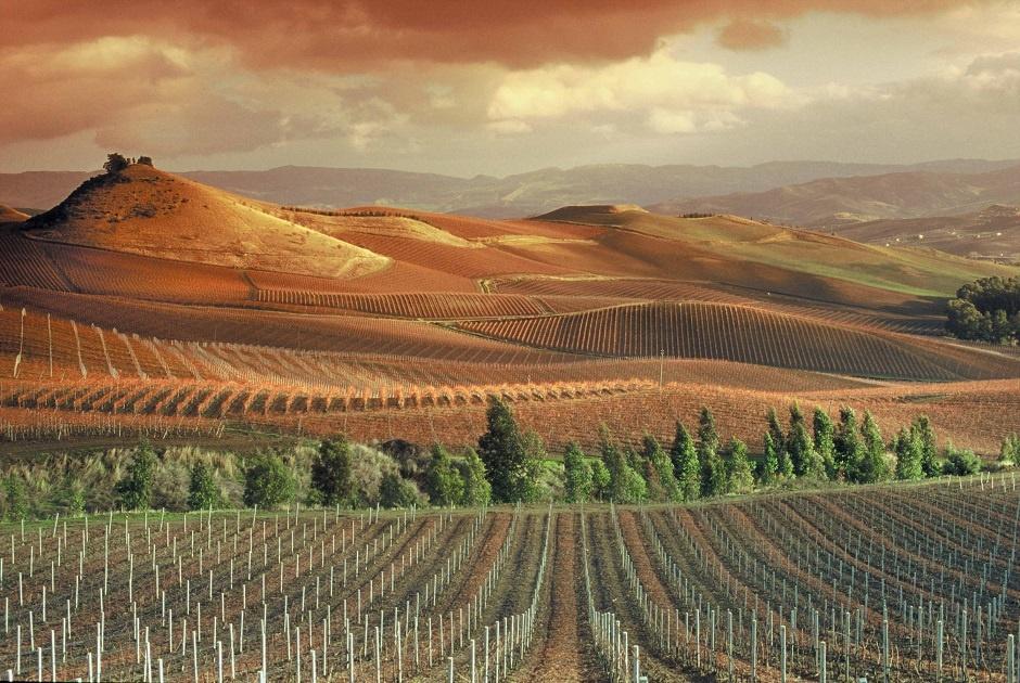 фото виноградника Марсала