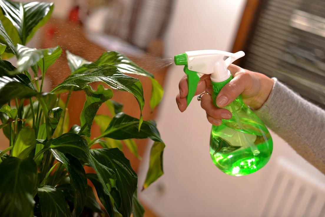 фото обработки растений против тли водкой