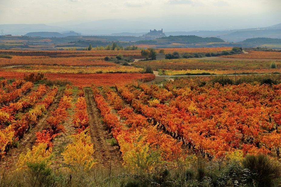 фото виноградника Риохи