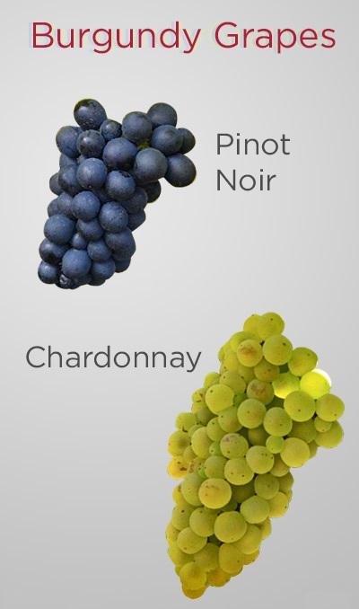 фото сортов винограда в Бургундии