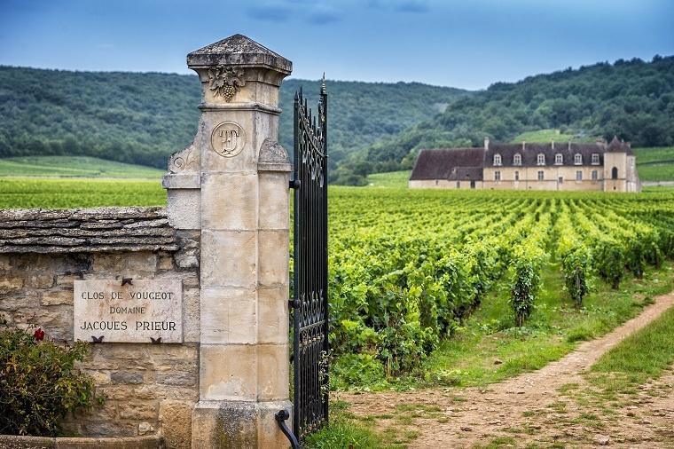 фото виноградника в Бургундии