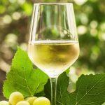 фото сухого белого вина Алиготе